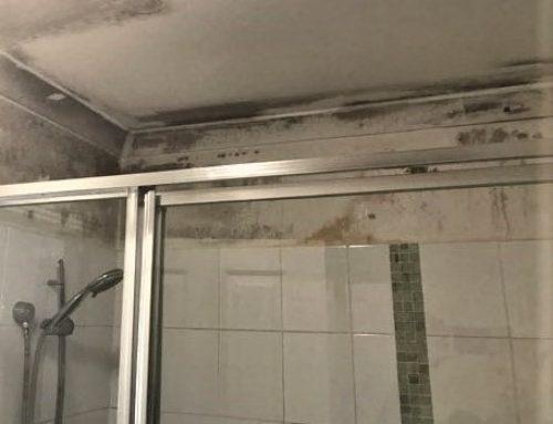 Mould in rental properties